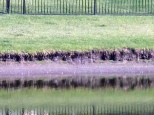 Our technicians will inspect for cracks, erosion and sediment build up at all of the inlets, outlets and outfalls. Areas surrounding the pond or lake will be checked for erosion or rodent damage. Safe, effective and long term solutions will be recommended.